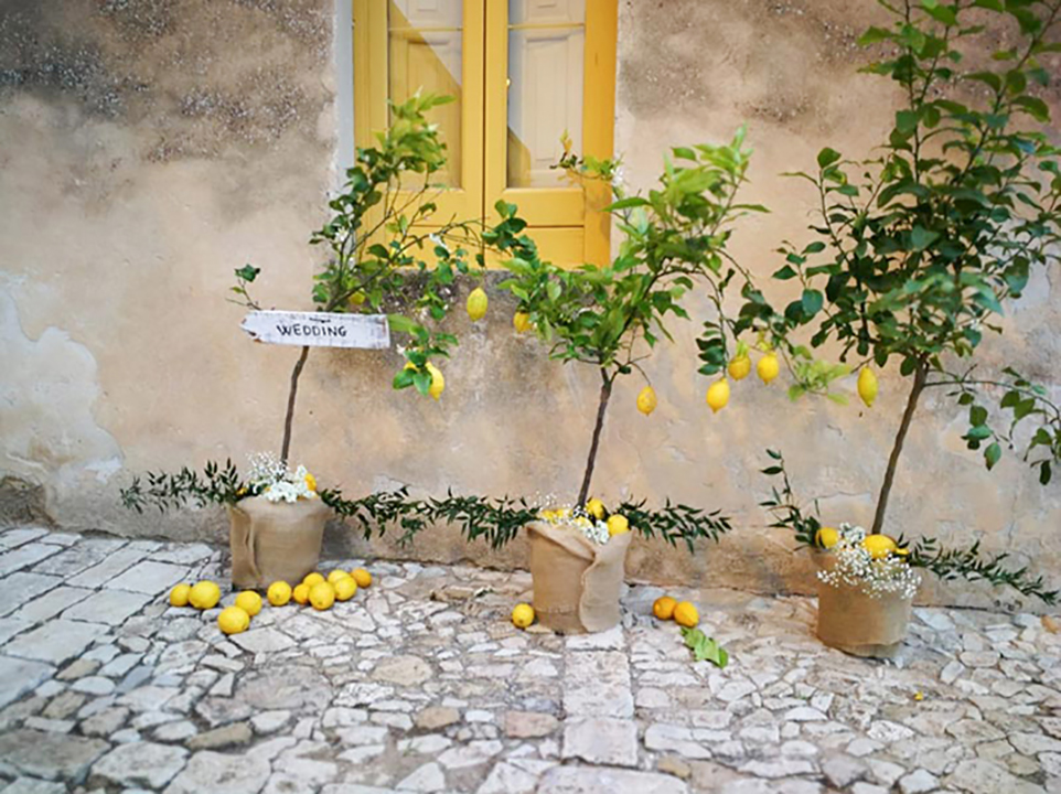 Allestimento piante di limone